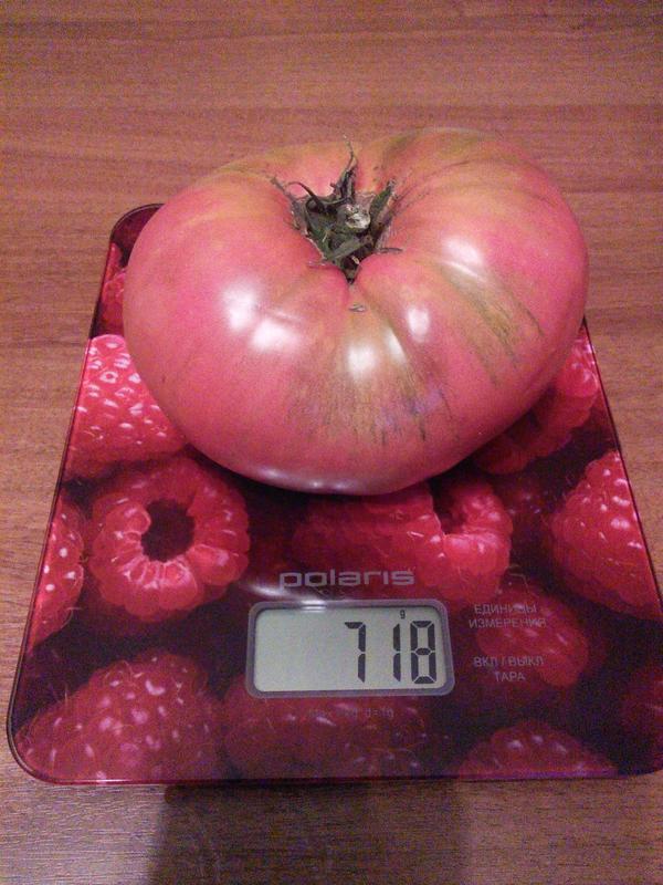 помидор Малиновый богатырь