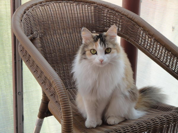 наша любимица лиса-Алиса