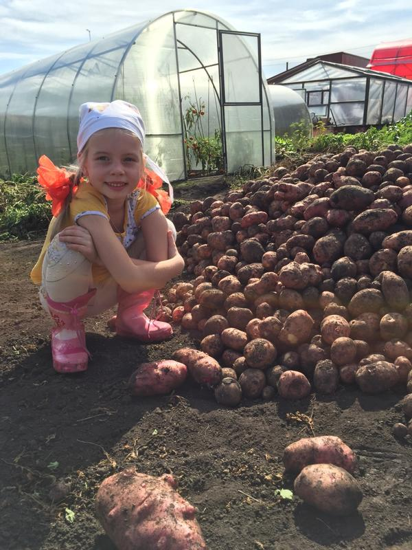 Мануйлова Варвара-первый копщик картошки на деревне