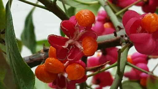 Раскрываются лепестки,в середине плод маленький с одной семечкой