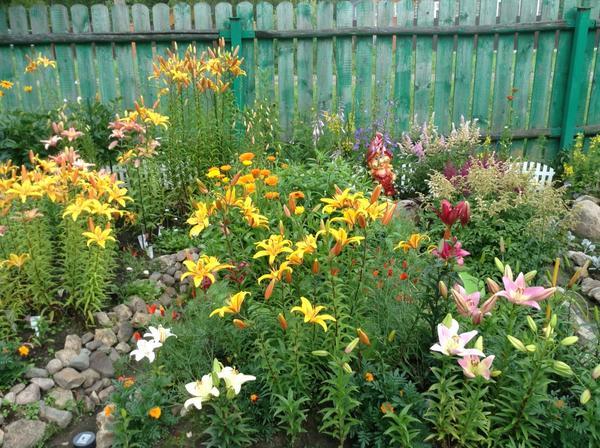 Лилии: посадка и уход в открытом грунте - выращиваем 98