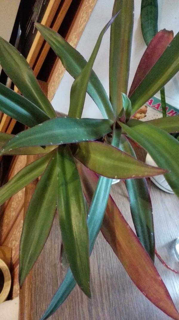 Будьте так добры, подскажите, что за растение?