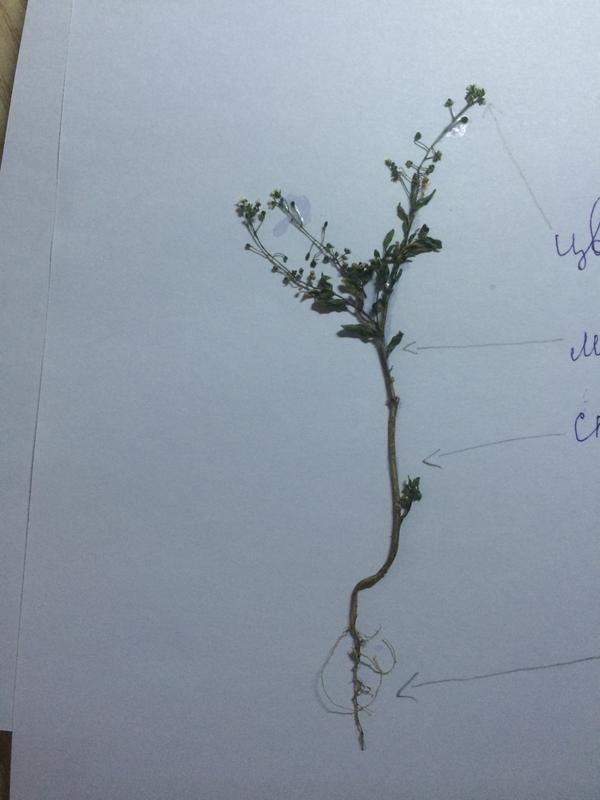 Растение выросло во дворе
