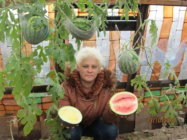 функциональности такое выращивание арбузов в теплице сейчас термобелье Norveg