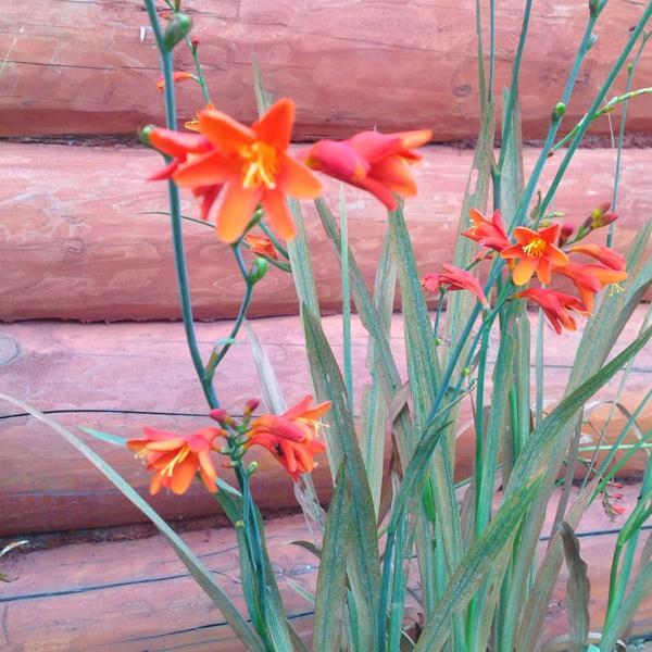 А это ее цветочки поближе, очень миленькие!
