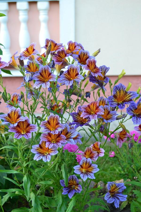 цветущее растение
