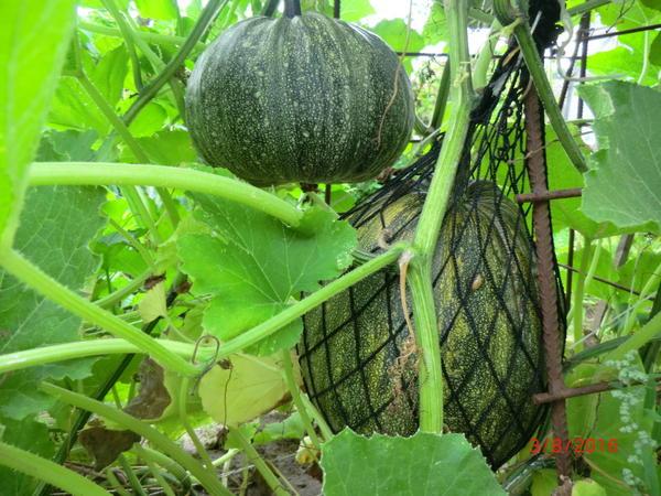 Урожай увеличивается
