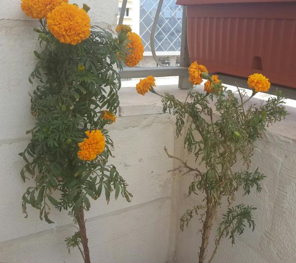 Для сравнения оба цветка