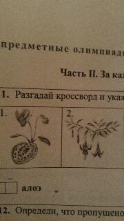 Что это за цветы?как называются?подскажите очень срочно надо...