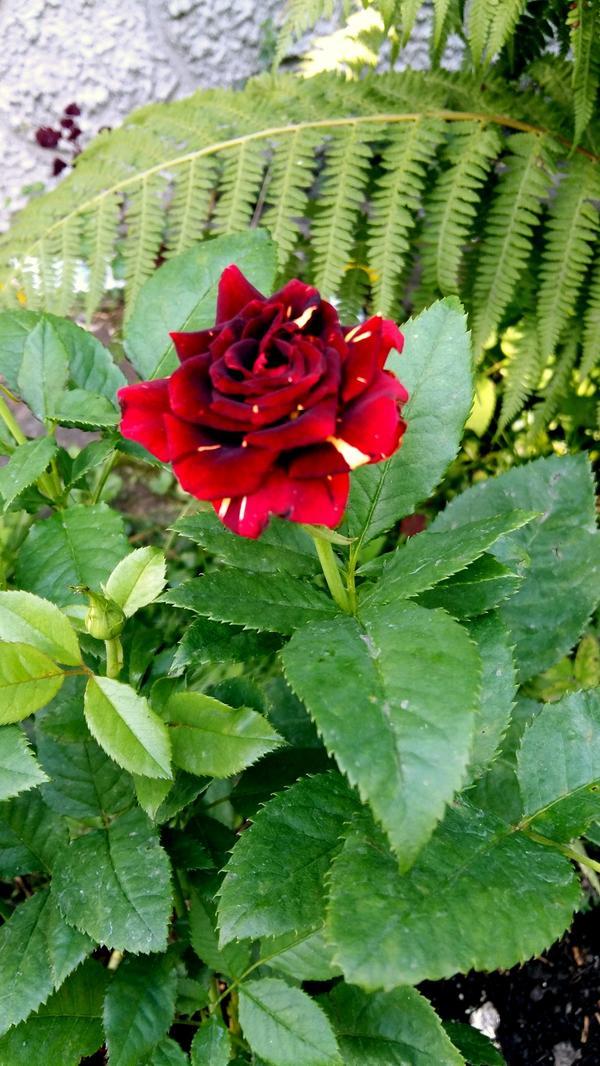 Очень обильно и все цветы разные