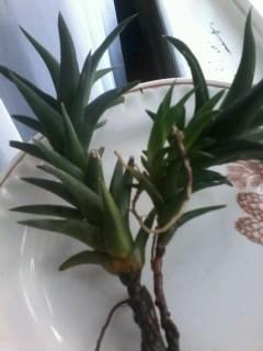 Что это за растение или цветок?