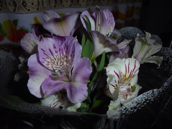 Что это за цветы? Как их название?