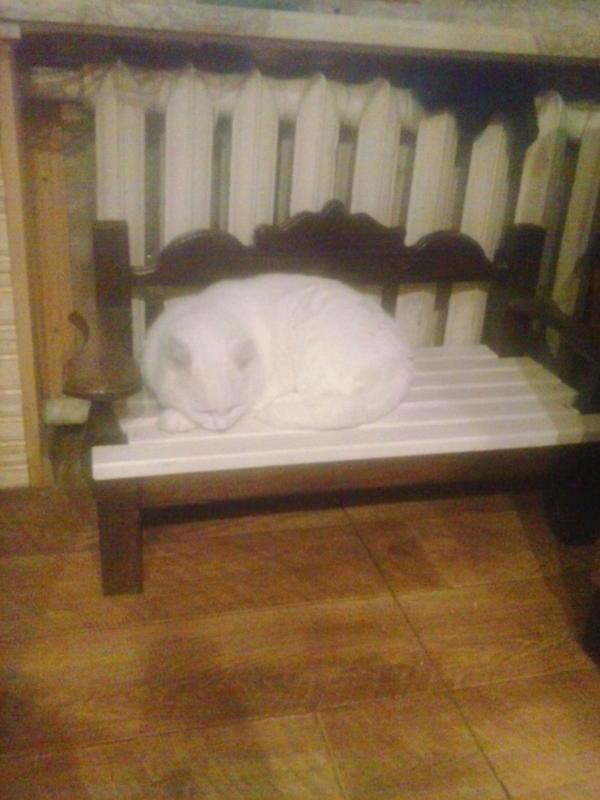 лежанка для любимого кота