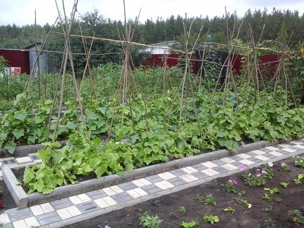 здесь наш огород