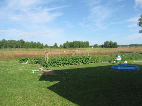 Наш огород.