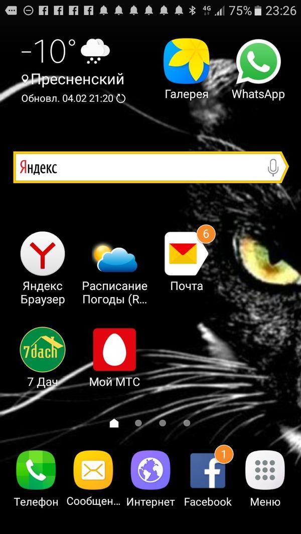 Главная кошка