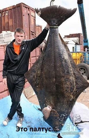А это рыбка палтус.