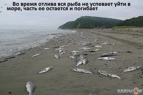 Вот такие у нас бывали берега.