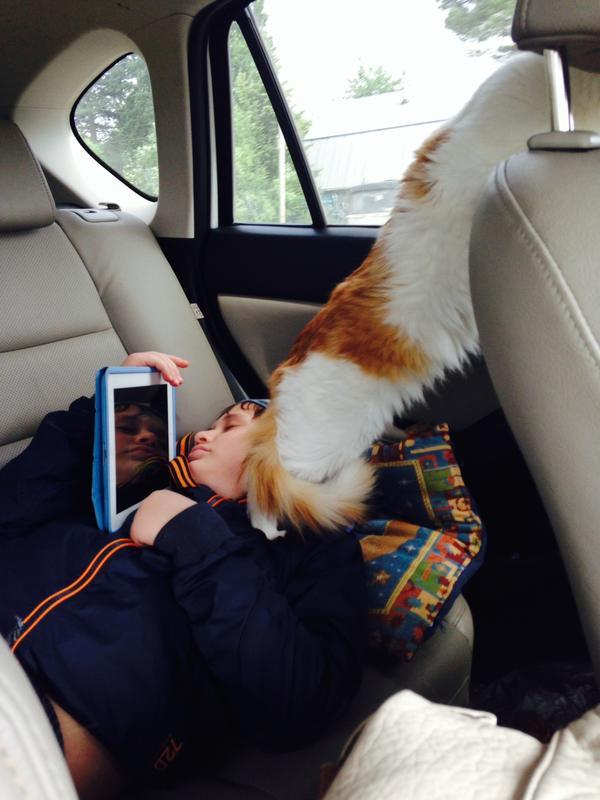На заднем сиденье авто кот, стоящий на задних лапах и смотрящий в окно на проезжающие окрестности.