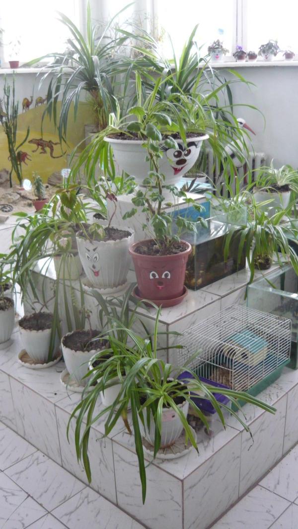 Волшебная комната природы