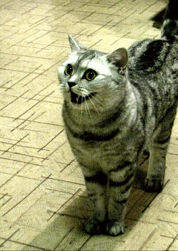 Я всем вашим котикам песенку спою!