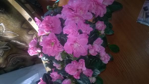 Сергей.подскажите как называеться цветок