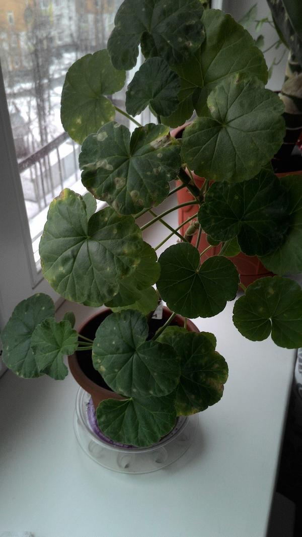Растение целиком