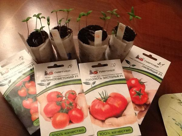 Растирки томатов