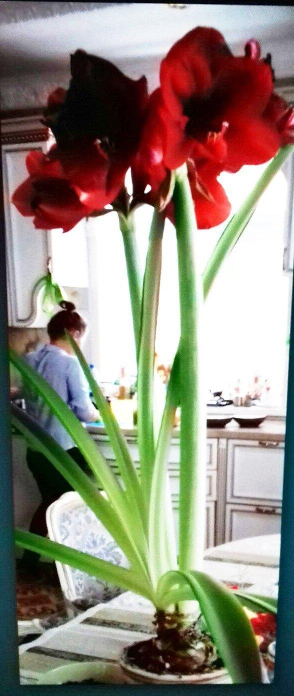 название цветка..выращивание..?