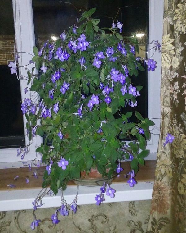 неизвестное комнатное растение