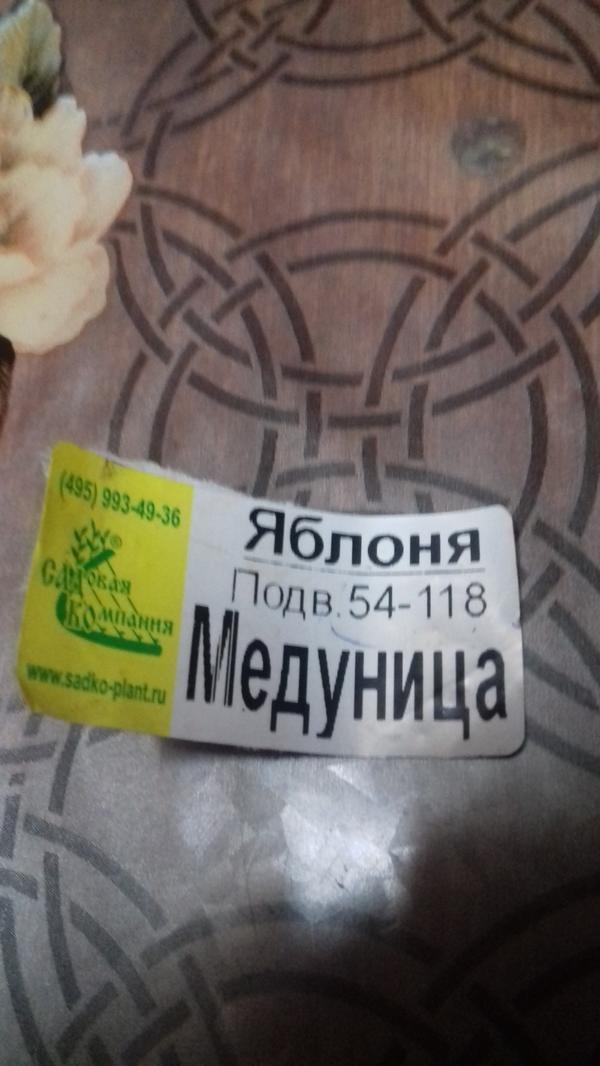 бирка с горшка Медуницы
