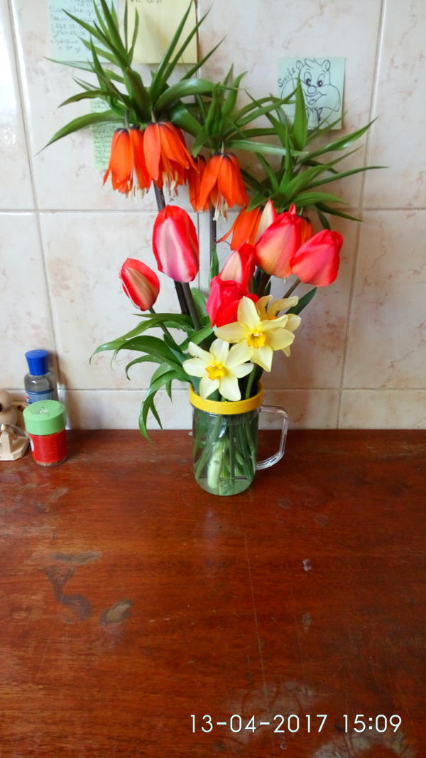 Не знаю что за цветок рядом с тюльпанами и нарцисами. Его в доме держать можно?
