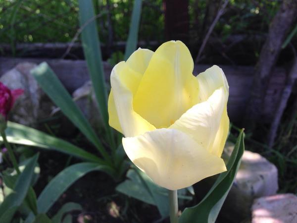 Бело-лимонный