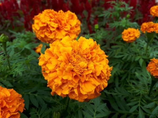 Цветок2