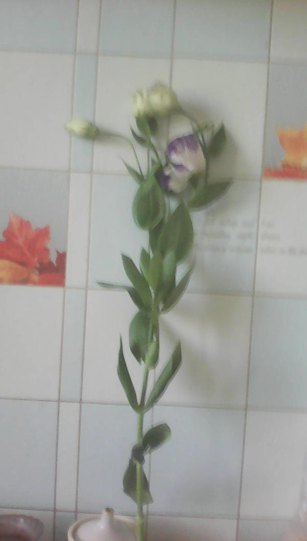 Как название этого цветка?