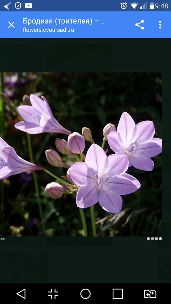 Помоему такие цветы)