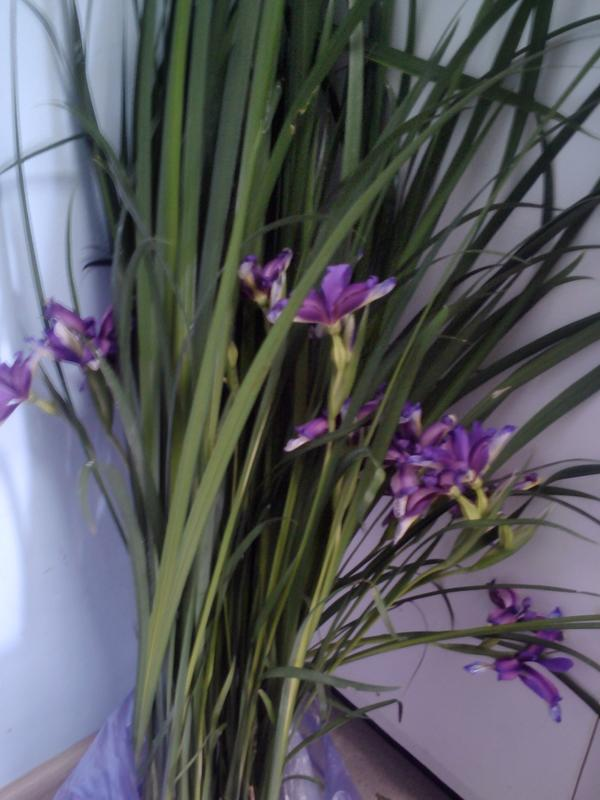 цветет в мае