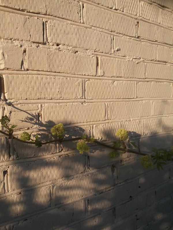 Это кирпичная стена. Уже не первый год, а как только что покрашена.