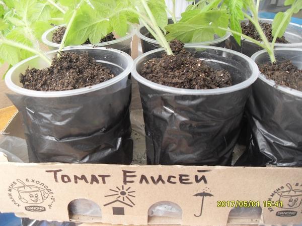 Растения выставила на светлый подоконник застекленной лоджии.