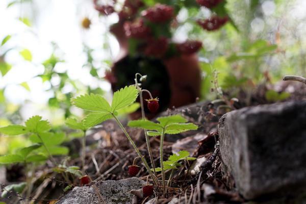 В лесной части двора