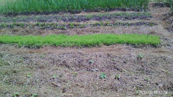 огрчики под сеном и добавлена скошенная трава