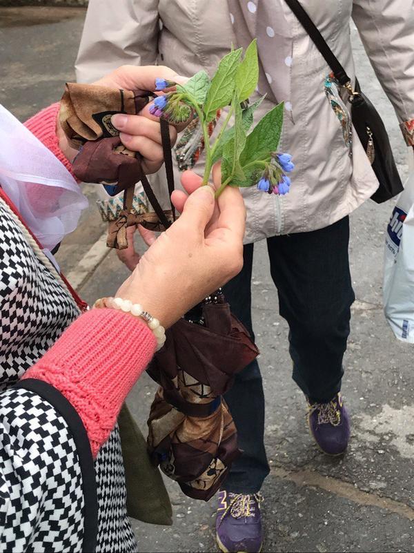 Как название этого растения?