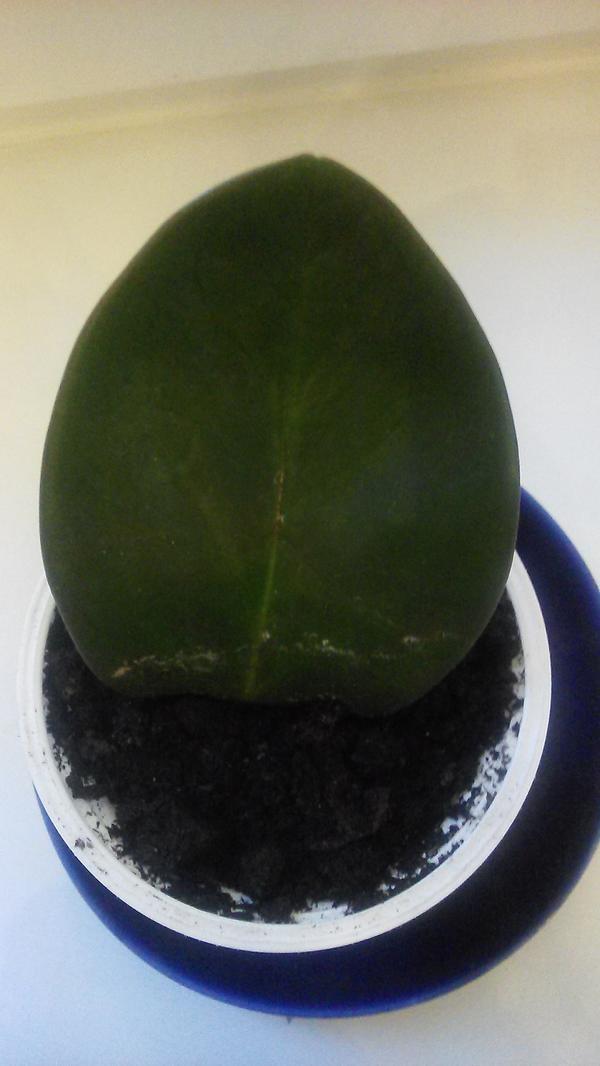 «неизвестные растения»