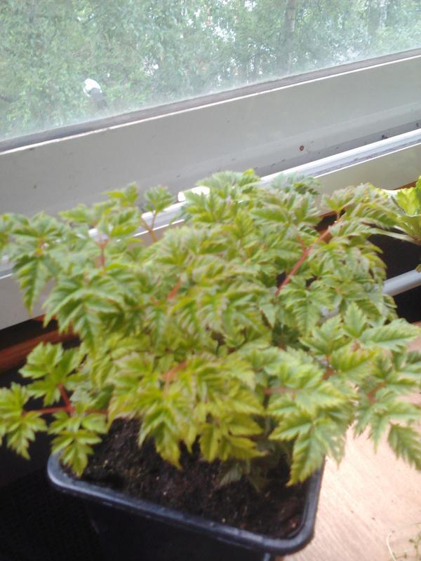 Подскажите пожалуйста,что за растение!?