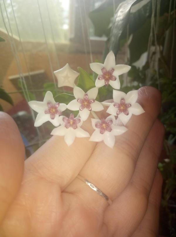 Как называется этот цветок.