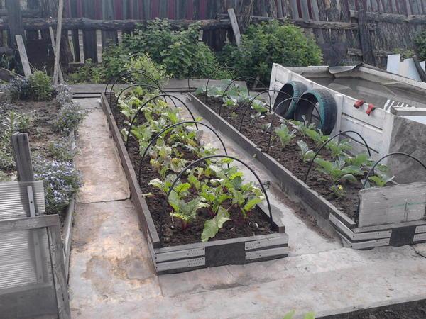 Все овощи огорожены, межи застелены старым линолеумом, а под ним влага сохраняется.