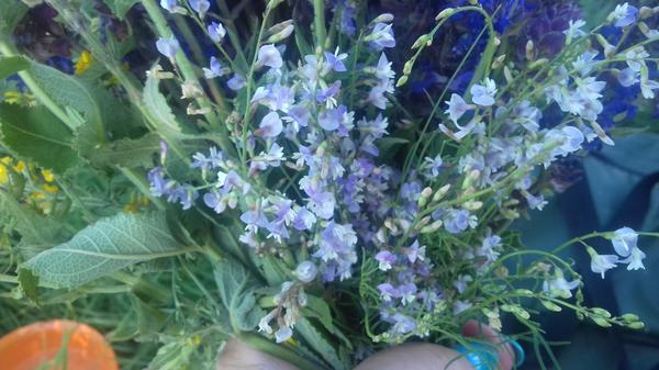 цветок с сильным ароматом парфюма