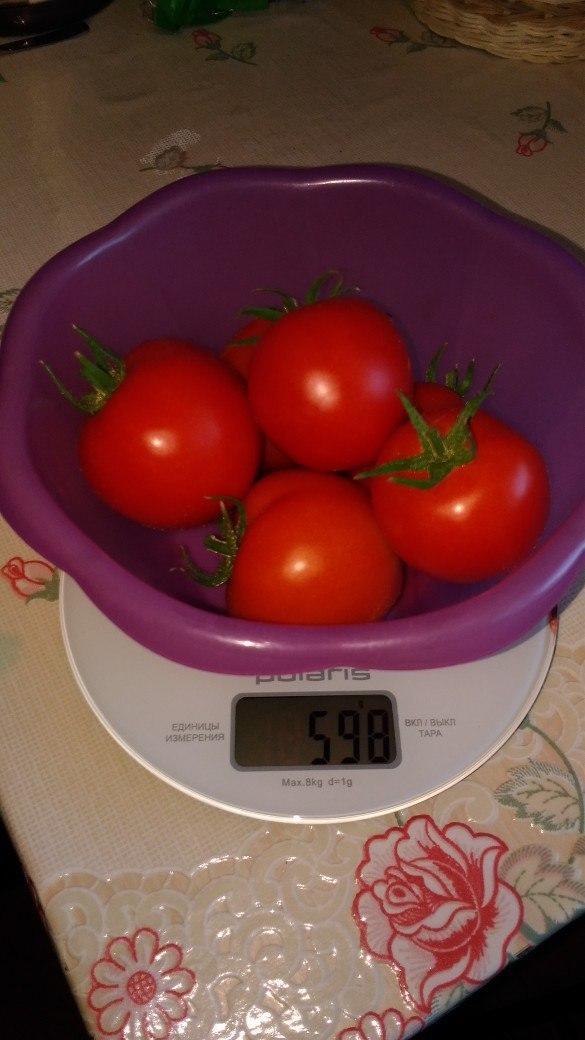 Вес спелых томатов 598 г.Если учесть вес первой кисти,то в общей сложности получается: 408+598=1006 или 1 кг 006 г.
