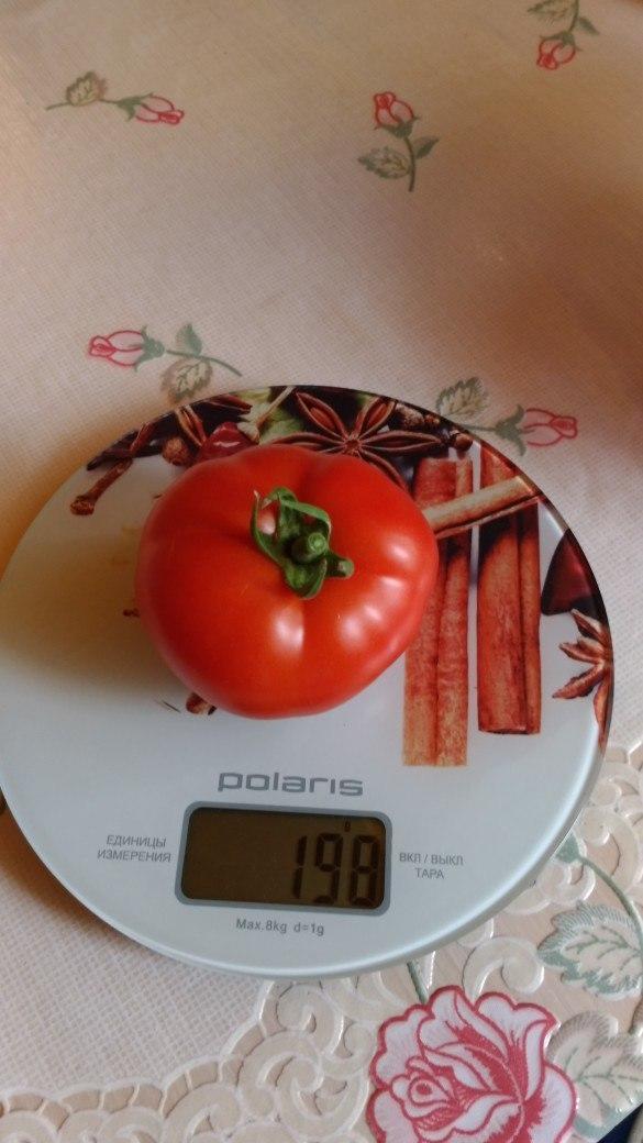 Это самый крупный томат из этого сбора.