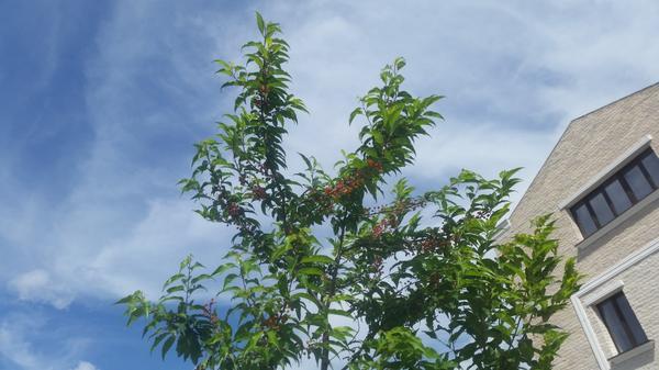 на фото молодое растение, видел и большие деревья